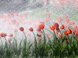 Дождем весенним освежен тюльпан.А ты к вину протягивай стакан.Любуйся: в брызгах молодая зелень!Умрешь - и новый вырастет тюльпан! Омар Хайям