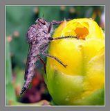 Ктыри — семейство хищных двукрылых насекомых. Можно считать, самое, кровожадное насекомое на земле. Может сесть, на большого жука и пока жук ползёт, прогрызть панцирь и сожрать внутренности.