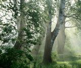 Шуваловский парк. Утреннее