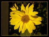 Царицыно Осень Цветы
