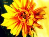 Мамины цветы.  Хорошего всем настроения!!!  Ваш Машук)))