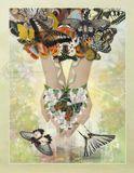 бабочки сфотографированы мной в течение 4 лет