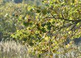 осень природа