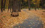 Осень... парк... легкий ветерок... и шелест листьев под ногами...