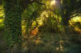 лес греция корфу