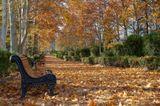 В Тбилиси осень обычно невзрачная, серая. Листва на деревьях становится сразу коричневой, минуя желтый и красный цвет. В этом же году палитра значительно ярче, глаз радуется.