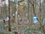 Птичьи кормушки в Подмосковном лесу.