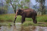 Индия.Штат Каранатака.Четверть всех индийских слонов и 10% тигров живут в Карнатаке в 5 национальных парках и 25 охраняемых территориях.