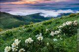 Цветущий склон Малого Тхача - цветы повсюду, от подножия до самой вершины! Утром растительность покрыта густой росой - стоит пройти десять метров, и словно побывал в ледяном душе, ботинки моментально промокают насквозь. Россия, республика Адыгея, природный парк Большой Тхач, июнь 2013Russia, Republic of Adygea, National Park Bolshoy Thach, june 2013