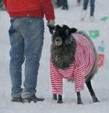Я в год Овцы желаю вам,Чтоб год вы встретили улыбкой!:)