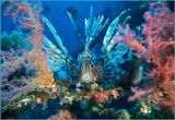Египет. Красное море.