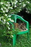 Когда Вы берете в свой дом котенка, то через год с удивлением замечаете, что живете в ЕГО доме! )