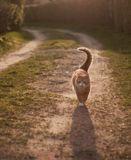 Рыжая Кошка Дайви празднует весну. Впереди долгих пять месяцев дачной свободы))