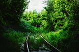 Железнодорожный тупик. Изумрудные листья. Деревья и солнце создают такое причудливое и особенное освещение.  Это фото определенно нравится мне. Волгоград