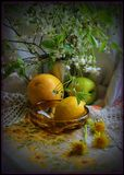 Натюрморт Цитрусовые фрукты