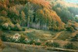 """""""Есть древо жизни. Все листы на нём - суть мы, но древо – ты"""""""