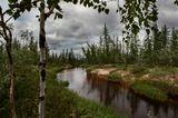 ямал тундра сибирь север новый уренгой, вода, лес, речка, песок,
