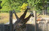Рижский зоопарк 23 авг. 2015