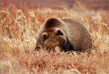 Пока все увлеченно фотографировали находящуюся вдали группу медведей, вдруг неожиданно обнаружили, что за нами тоже следят.