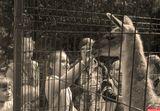 Детская экскурсия в Ровенский зоопарк, Украина