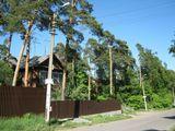 домик в деревне, природа, дорога, деревья
