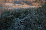 Снято 6 ноября на реке Красивая Меча в Тульской области под дер.Шилово