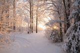 один солнечный зимний день