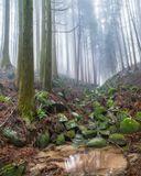 """Термин """"сухой ручей"""" используется в ландшафтном дизайне, существует мнение, что пришел он в Европу из Японии. В японских садах камней вода представлялась символически – в виде мелкой гальки или песка старательно уложенного бурными волнами или лёгкой рябью. В природе Японии существует множество видов естественных сухих ручьев, глядя на такую красоту природы умелые садоводы придумали устраивать в своих маленьких садах сухие ручьи. Пусть в них нет воды, как и в горах, можно пройти километры по такому руслу, все равно увидишь крохотный ручеек чистейшей горной воды."""