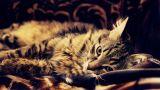Кот вальяжно отдыхает на покрывале.