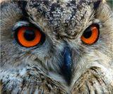 """Янтарь - это кличка филина, которого я снял вчера в хозяйстве ловчих птиц """"Сункар"""" под Алма-Атой. Думаю, понятно, почему он так называется."""