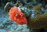 Икра голожаберного моллюска Испанский Танцор:http://www.lensart.ru/picture-pid-6dac0.htmКрасное море