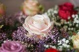 Роза, снятая в помещёнии при естественном освещении ISO 100, линза Canon 85mm f:1,8/200