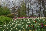 Кёкенхофф,Голландия