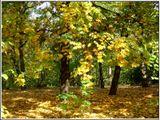 Солнечный день, парк, начало листопада