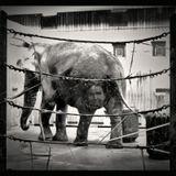 С наступающим Первомаем! Будьте людьми с человеческим лицом , чтоб не оказаться у слона в заднице.