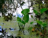 лес,природа,вода,цветы,флора