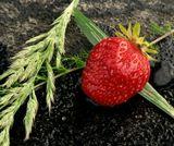 ягода,лето,клубника,травы,флора