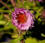 цветы,осень,флора,растения,природа