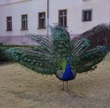 Mесто фотографирования, Вояновы сады-Мала Страна-Прага-1