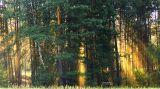 натуральная игра солнечных лучей в лесополосе возле Гомеля (Беларусь), август 2016