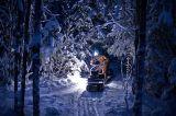 Сказочный зимний лес.