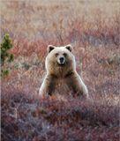 Пока мы в бинокли безуспешно пытались обнаружить бродяших где-то рядом медведей, случайно оглянувшись назад, заметили что нас самих уже обнаружили.