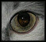 Кошки - существа загадочные... Взгляд их бездонен. Иногда в нем отражается их независимый мир, иногда тот мир, который видим мы...  В осенний вечер на балконе.