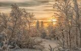 зима, мороз, снег, солнце, деревья, лес
