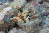 Размер Рыбки 7-8 сантиметров.Горбатый Кузовок, Красное море