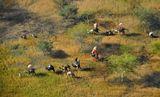 Судан.Передвижение кочевых племён