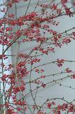 .заколосился твой барбарис...урожайный год намечается...с Днём Рожденья, Андрюша ).http://www.lensart.ru/gallery-uid-8d6.htm