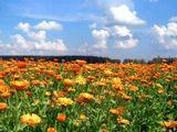 """Оранжевое небо, Оранжевое солнце, Оранжевая мама, Оранжевый верблюд Оранжевые песни Оранжево поют! /""""Чайф""""/"""