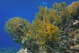 Подводный пейзаж, Красное море, Иордания