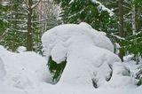 снежные сугробы в лесу